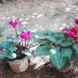Ας αισιοδοξήσουμε με τα χρώματα της Φύσης !!!